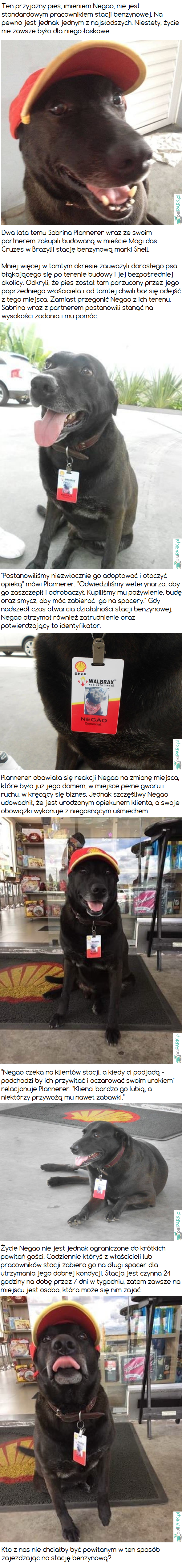 Pies porzucony w pobliżu stacji benzynowej został jej pracownikiem