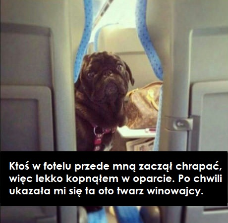 pies samolotem