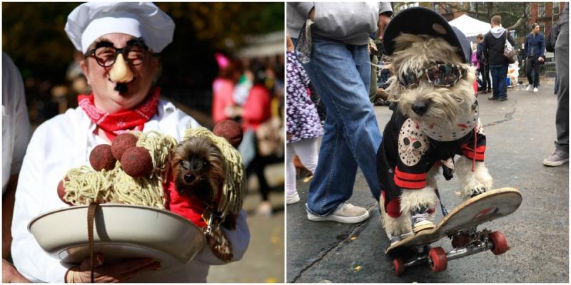 Pierwszy wybieg dla psów w historii