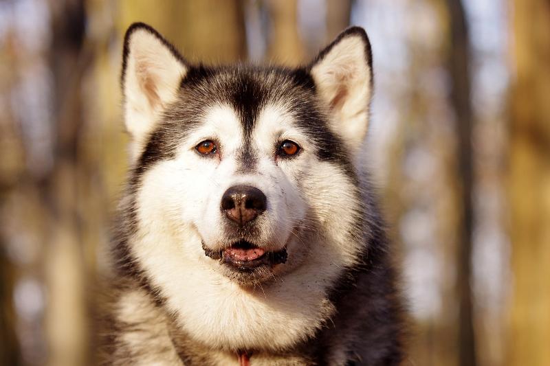 rasy psów popularne w Polsce