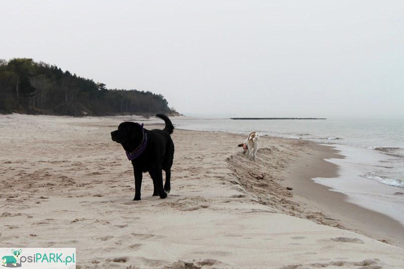 Plaże dla psów Hel Półwysep Helski